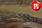 郑建国油画:静静的湖